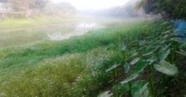 চলনবিল এলাকার খাল বিল নদী নালা স্বকীয়তা হারাচ্ছে