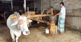 ভাঙ্গুড়ায় হারিয়ে যাচ্ছে ঐতিহ্যবাহী কাঠের ঘানি