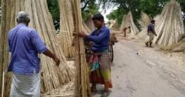 চাটমোহরে আশার আলো ছড়াচ্ছে সোনালী আঁশের রূপালি পাটকাঠি