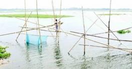 সুজানগরে গাজনার বিলে অবৈধ জাল দিয়ে চলছে মাছ নিধন