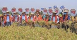 চাটমোহরে সমলয় পদ্ধতির বোরো ধান কর্তন উৎসব